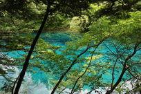 丛林中蓝色湖泊的古木枯枝
