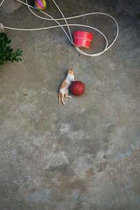 玩篮球的小猫