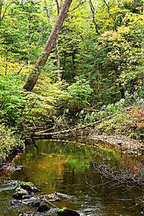 长白山森林小溪