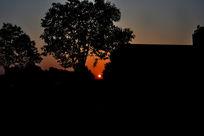 日出树的剪影