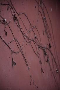 红墙藤蔓底纹背景