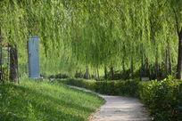 汉城湖边的绿荫小道