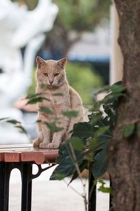 虎视眈眈的花猫