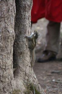 机敏的小松鼠