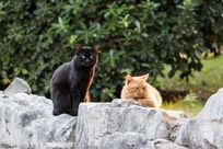 享受阳光中的黑猫与花猫