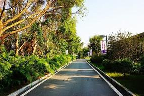 路边绿化带