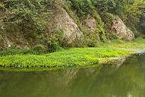 水池的草地
