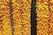 丰收的玉米