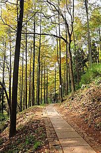 莫干山大坑景区林间小道