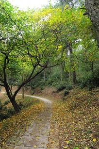 莫干山景区小路上的落叶