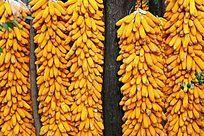 收获的玉米