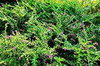 植物花卉背景