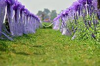 紫纱装点下的草丛道路