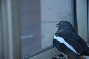 鸟类特写小鸟