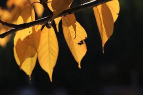 秋天的風景