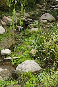 草地的石头