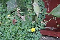 植被中的黄花图片