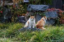 两只流浪猫