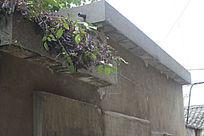 墙壁上的植被图片