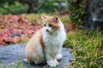 张望的小猫