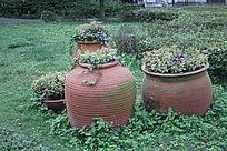 陶罐中的植被图片