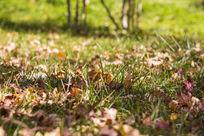 小草中的枯叶