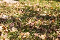 小草中的叶子