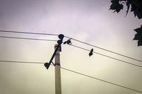 校园电线上的鸟儿