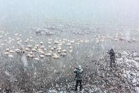 雪花飘落湖水里的天鹅