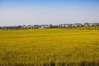 稻田与乡村