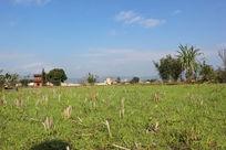 蓝天下的空旷田野