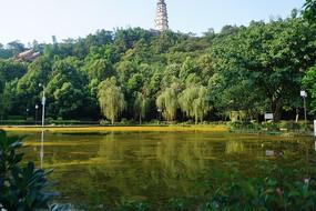 宜宾白塔山 绿色树木碧绿湖水