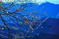 金色的树叶