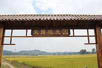 采摘观光园内的水稻景色