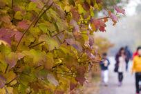 秋季干边树枝