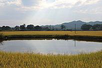 田园中的池塘别具一格