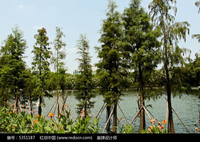 流花湖水杉林