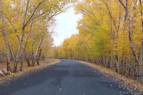 张北草原天路上秋天公路景色