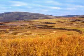 张北草原天路上秋天景色