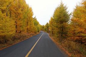 中国的66号公路张北坝上草原秋天美景