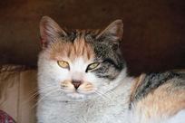 小花猫犀利的眼神