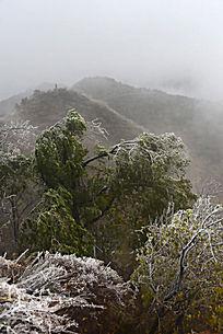 被冻雨压弯的太秆树木植被