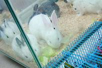 玻璃缸里的小兔子