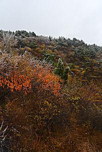 冻雨中红色的太行植被叶子