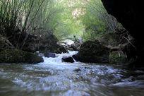 流淌在竹林间的溪流