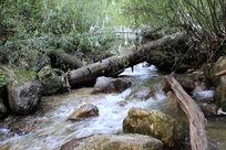 美丽的溪流