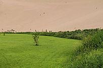 沙漠中的绿草地