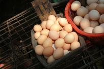 阳光下的鸡蛋