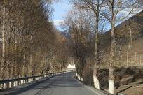 秋季高原丛林间的公路风景