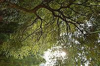 阳光下的枝叶